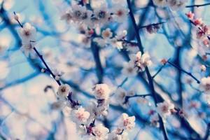 青空と梅の花